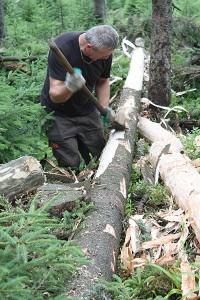 Fot. 4. – Korowanie zasiedlonych drzew pułapkowych (Fot. K. Bisaga)