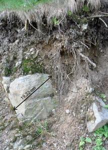 Góra Radunia – gleby serpentynitowe