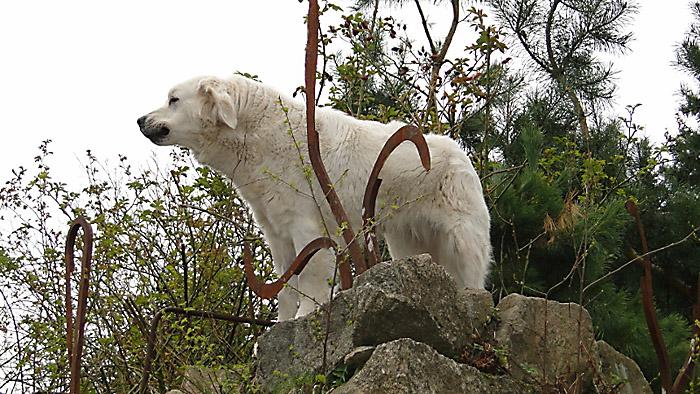 """""""Biały miś"""" pilnujący swojej góry. Foto: Krzysztof Tęcza"""