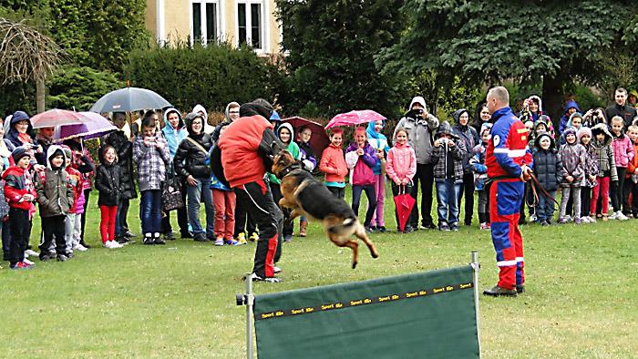 Łapanie złoczyńcy przez wyszkolonego owczarka. Foto: Krzysztof Tęcza