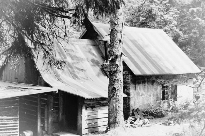 Smogorniak jeszcze w lesie (VII-1964)